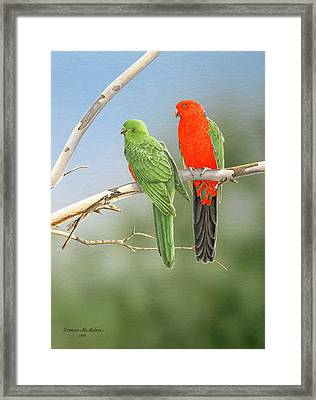 Bush Monarchs - King Parrots Framed Print