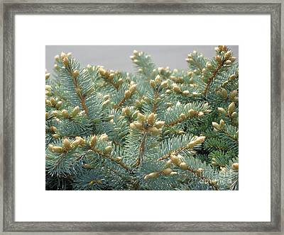 Framed Print featuring the photograph Bush Mountain Crest by Christina Verdgeline