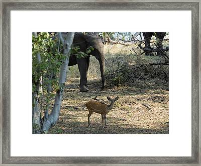 Bushbuck And Elephant In A Forest, Toka Framed Print by Panoramic Images