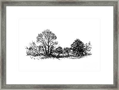 Bushes Framed Print