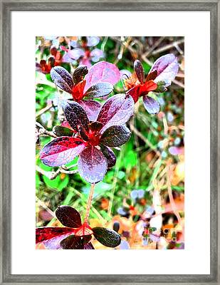 Winter Bushes Framed Print