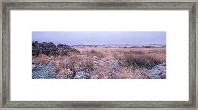 Bushes On A Landscape, Dartmoor, Devon Framed Print by Panoramic Images