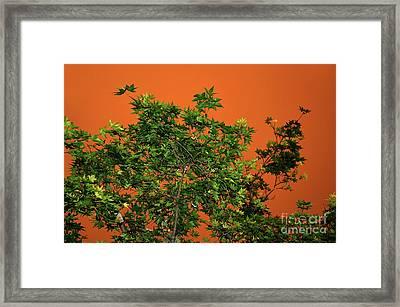 Bushfire Skies Framed Print by Kaye Menner