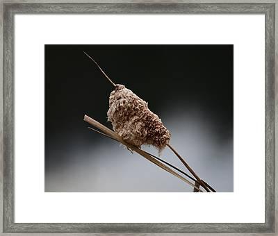 Bushy Tail Framed Print
