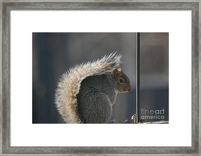 Framed Print featuring the photograph Bushy Tail by Mark McReynolds