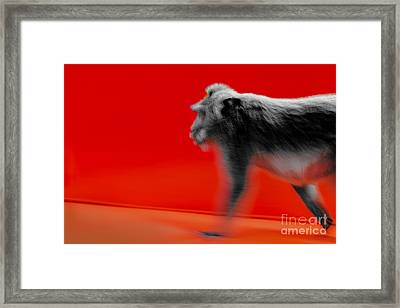 Business Framed Print by Julian Cook
