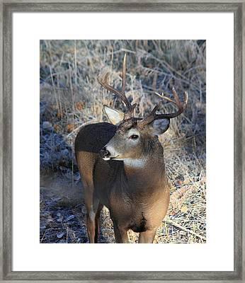 Busted Antlers Framed Print