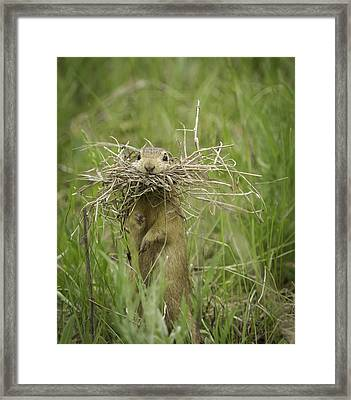 Busted Framed Print by Thomas Young