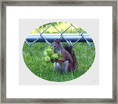 Busted Framed Print by Will Borden