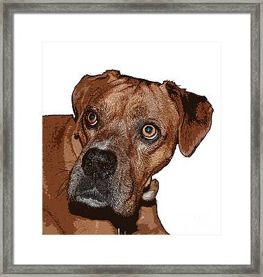 Buster Brown The Boxer Framed Print by Sandra Clark
