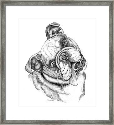 Buster Framed Print by Catherine Garneau
