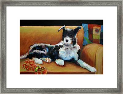 Buster The Border Collie Framed Print