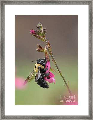 Busy As A Bee Framed Print by Kathy Baccari