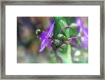 Busy As A Bee Framed Print by Mary Lou Chmura