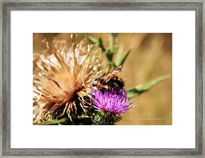 Busy As A... Framed Print