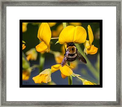 Busy Bee 3 Framed Print