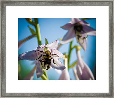 Busy Bee Framed Print by Brian Caldwell