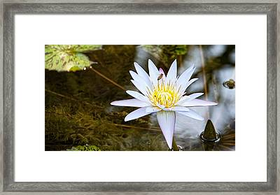 Framed Print featuring the photograph Busy Bee by Dave Files