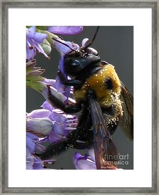 Busy Bee Framed Print by Greg Patzer