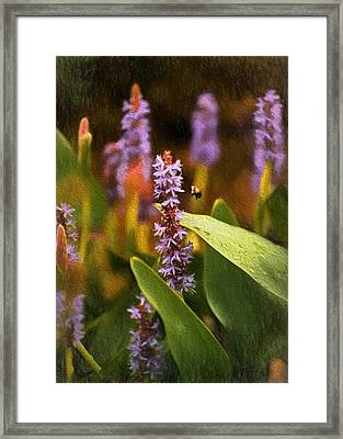 Busy Bee Framed Print by Richard Rizzo