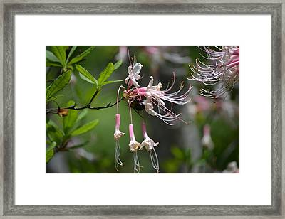 Framed Print featuring the photograph Busy Bee by Tara Potts