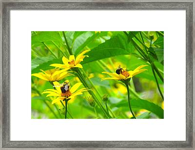 Busy Bees Framed Print by Andrea Dale