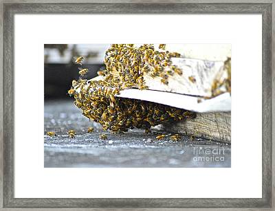 Framed Print featuring the painting Busy Bees by Laura Forde