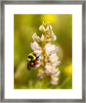 Busy Busy Busy Framed Print by Alexandra  Rampolla