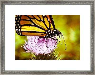 Busy Butterfly Framed Print by Cheryl Baxter