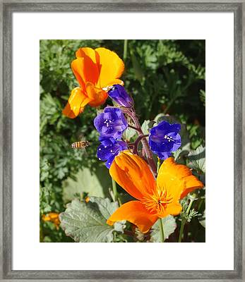 Framed Print featuring the photograph Busy Buzzy by David Rizzo