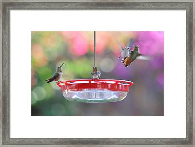 Busy Day At The Feeder Framed Print by Lynn Bauer
