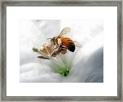 Framed Print featuring the photograph Busy by Joyce Dickens
