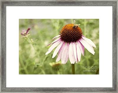 Busy Little Bee Framed Print by Juli Scalzi