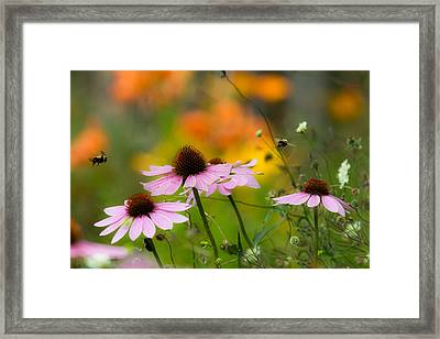 Busy Morning Framed Print by Mary Amerman