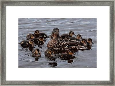 Busy Mum Framed Print
