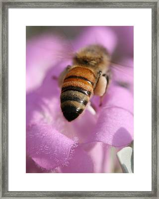 Busybee Framed Print