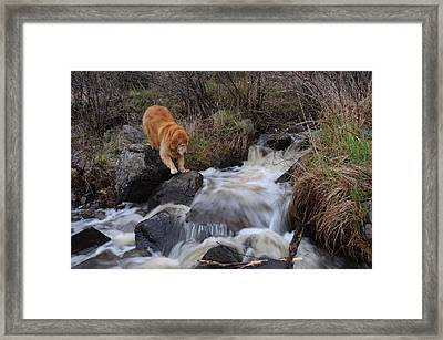 But Mom I Might Get My Feet Wet Framed Print by Sandra Updyke