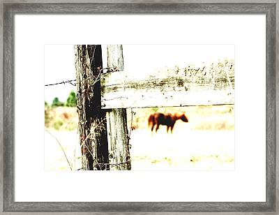 But Not Forgotten Framed Print