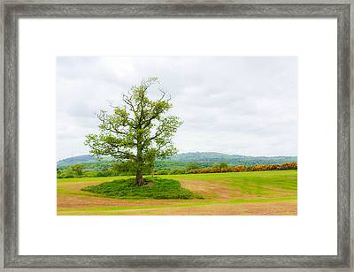 But Only God Can Make A Tree Framed Print by Semmick Photo