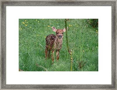 But That Rose Was So Tasty Framed Print by Kym Backland