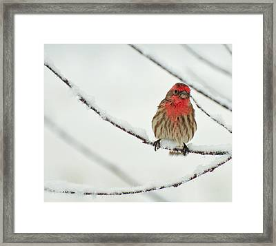 Framed Print featuring the photograph But This Is North Carolina by John Harding