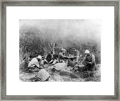 Butchering Galapagos Tortoises Framed Print by Library Of Congress