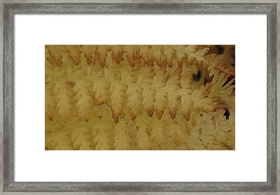Butter Ferns Framed Print