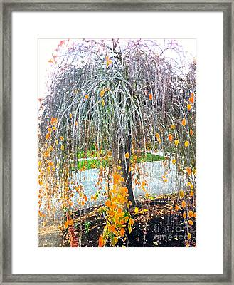 Butter Tree Framed Print by Cadence Spalding