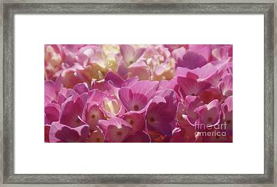 Framed Print featuring the photograph Buttercream by Linda Shafer