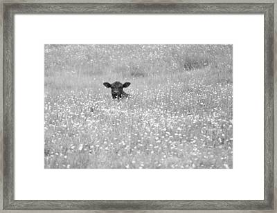 Buttercup In Black-and-white Framed Print by JD Grimes