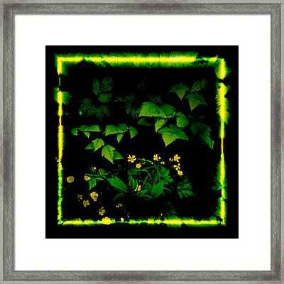 Buttercups In Forest 1 Framed Print