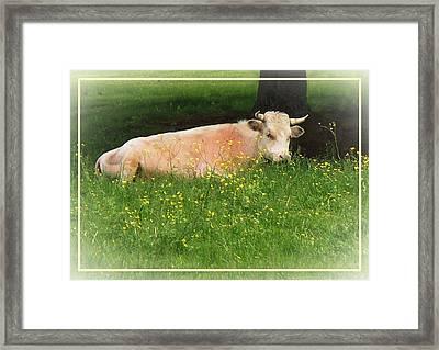Buttercup Framed Print by Joy Nichols