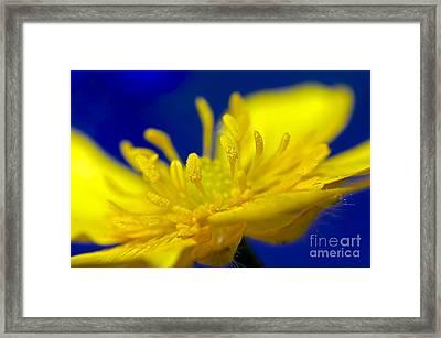 Buttercup Macro Framed Print