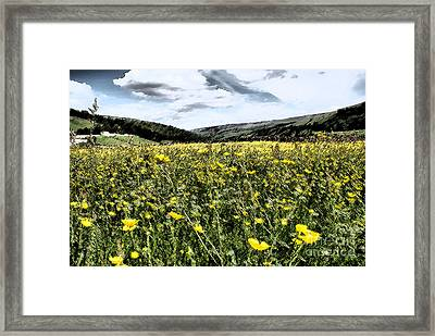 Buttercups Meadows Framed Print by Sandra Cockayne